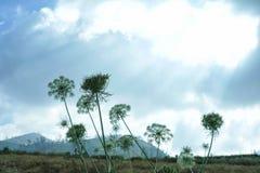 Landschaft von Landwirtschaftsfeldern mit Karottenblumen lizenzfreie stockfotografie