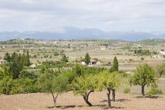 Landschaft von Majorca Lizenzfreies Stockfoto