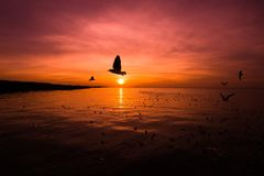 Landschaft von Meer bei Sonnenaufgang, Schattenbild zu den Fliegenvögeln bei Sonnenuntergang stockfoto