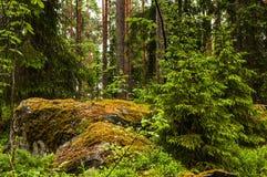 Landschaft von Nordwäldern mit den Flusssteinen überwältigt mit Moos Lizenzfreie Stockbilder