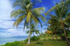 Landschaft von Palmen und Ozean auf Hintergrund des blauen Himmels lizenzfreies stockbild