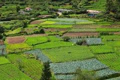 Landschaft von Plantagen des grünen Tees. Munnar, Kerala, Indien Stockbild