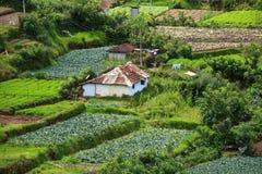 Landschaft von Plantagen des grünen Tees. Munnar, Kerala, Indien Stockfoto