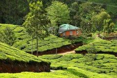 Landschaft von Plantagen des grünen Tees. Munnar, Kerala, Indien Stockfotografie