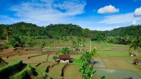Landschaft von Reisfeldern Stockbild