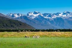 Landschaft von Südinsel von Neuseeland Stockbild