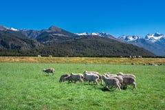 Landschaft von Südinsel von Neuseeland Lizenzfreie Stockfotos
