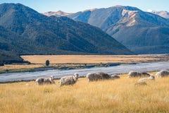 Landschaft von Südinsel von Neuseeland Stockbilder