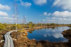 Landschaft von Sümpfen mit Bahn in Lettland lizenzfreies stockfoto