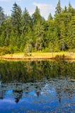 Landschaft von schönem See und von Weichholzwald Lizenzfreie Stockbilder