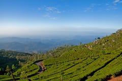 Landschaft von Teeplantagen Stockfotografie