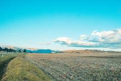 Landschaft von Weizenernten in stockbilder