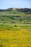 Landschaft während des Frühlinges, Malta Lizenzfreies Stockfoto