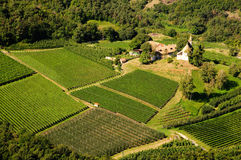 Landschaft - Weinberg und Apfelbaum Stockfotografie