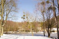 Landschaft winterlich - Schnee und sonnen- Frankreich Stockfotografie