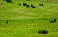 Landschaften der Wiese Lizenzfreie Stockfotos