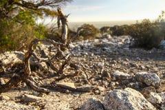 Landschaften von Australien lizenzfreie stockfotografie