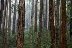 Landschaften von Australien stockfotos