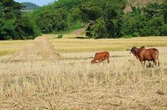 Landschaftlandschaftsansicht Lizenzfreies Stockbild
