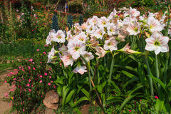 Landschaftlich gestaltete Blume Lizenzfreie Stockfotografie