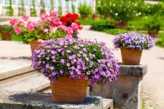 Landschaftlich gestalteter Blumengarten lizenzfreie stockfotos