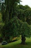 Landschaftlich verschönerter Baum Stockbilder