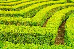Landschaftlich verschönerter Garten Lizenzfreies Stockbild