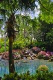 Landschaftlich verschönerter tropischer Garten Stockfotos