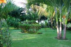 Landschaftlich verschönerter tropischer Garten Stockbild