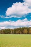 Landschafts-ländliches Feld oder Wiesen-Landschaft mit grünem Gras auf Vordergrund und Forest On Background Under Scenic-Frühling Lizenzfreie Stockfotos