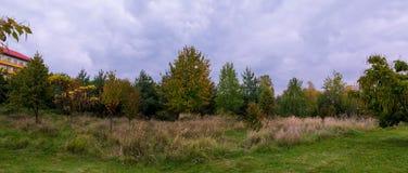 Landschafts-ländliches Feld oder Wiesen-Landschaft mit grünem Gras auf Vordergrund und Forest On Background Under Scenic-Frühling Stockfoto