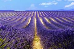 Landschafts- und Lavendelfeld, Frankreich lizenzfreies stockfoto
