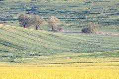 Landschaftsackerlandlandschaft Stockfoto