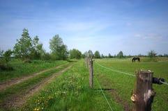 Landschaftsansicht der Wiese und des Pferds auf Weide Stockfoto