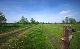 Landschaftsansicht der Wiese und des Pferds auf Weide Lizenzfreies Stockbild