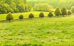 Landschaftsansicht des grünen Feldes Apfelbaum, Sonne, Blumen, Wolken, Wiese? Lizenzfreies Stockfoto