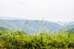 Landschaftsansicht in Istria stockbild