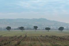 Landschaftsansicht mit Reihe Bäumen Stockbild