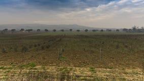 Landschaftsansicht mit Reihe Bäumen Lizenzfreie Stockfotografie
