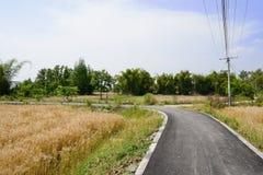 Landschaftsasphaltbelag auf den Weizengebieten des sonnigen Sommers achtern kurven Lizenzfreie Stockfotografie