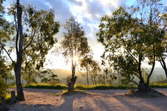 Landschaftsbäume und -sonnenuntergang Lizenzfreies Stockfoto