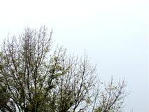Landschaftsbäume und -vegetation Stockbild