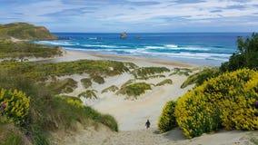 Landschaftsbild des sandigen Küstenstrandes in Neuseeland stockfotos