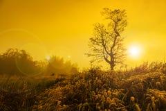 Landschaftsbild mit Baumschattenbild bei Sonnenuntergang Lizenzfreie Stockfotografie