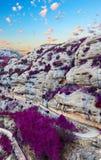 Landschaftsbildszene im purpurroten Ton Stockfoto