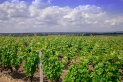 Landschaftsbordeaux wineyard Frankreich, Europa Natur lizenzfreies stockbild