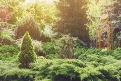 Landschaftsdesign, immergrüne Tannenbäume und Sträuche stockbilder