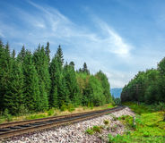 Landschaftseisenbahn in der Sommerwaldtagesnahaufnahme Lizenzfreie Stockfotografie