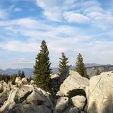 Landschaftsesprit-Immergrünbäume Stockfoto