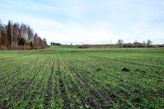 Landschaftsfelder im Herbst mit jungen Ernten Lizenzfreie Stockfotografie